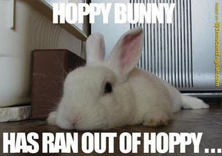 Funny-tired-bunny
